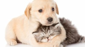 puppy-kitty