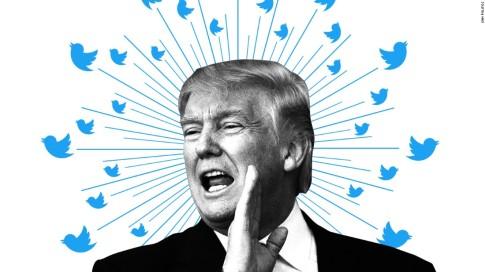 Tweet birds white background