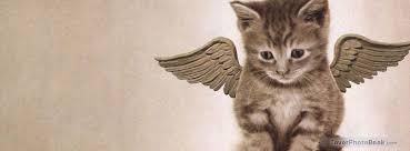 cat angel