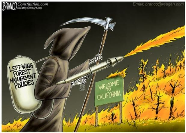 https://aim4truthblog.files.wordpress.com/2018/11/forest-management-branco.jpg