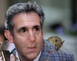 cohen rat