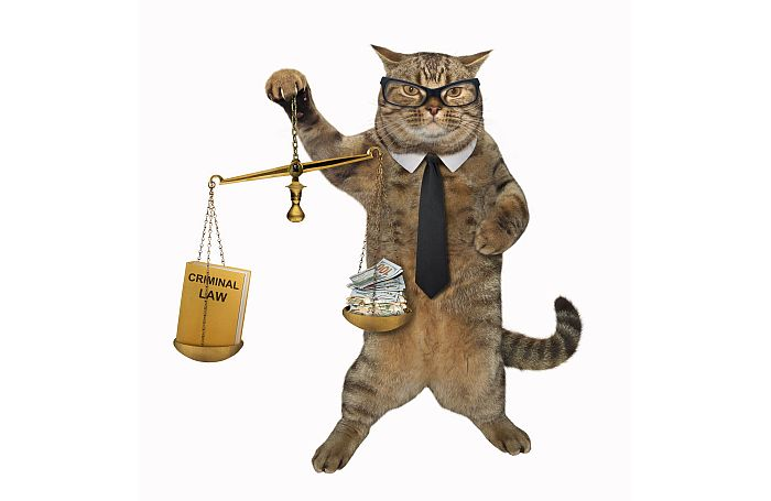 TMZ Reports Ginsberg Alive Cat-glasses-legal-lawyer-lawsuit-justice-court