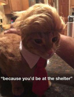 cat trump hair