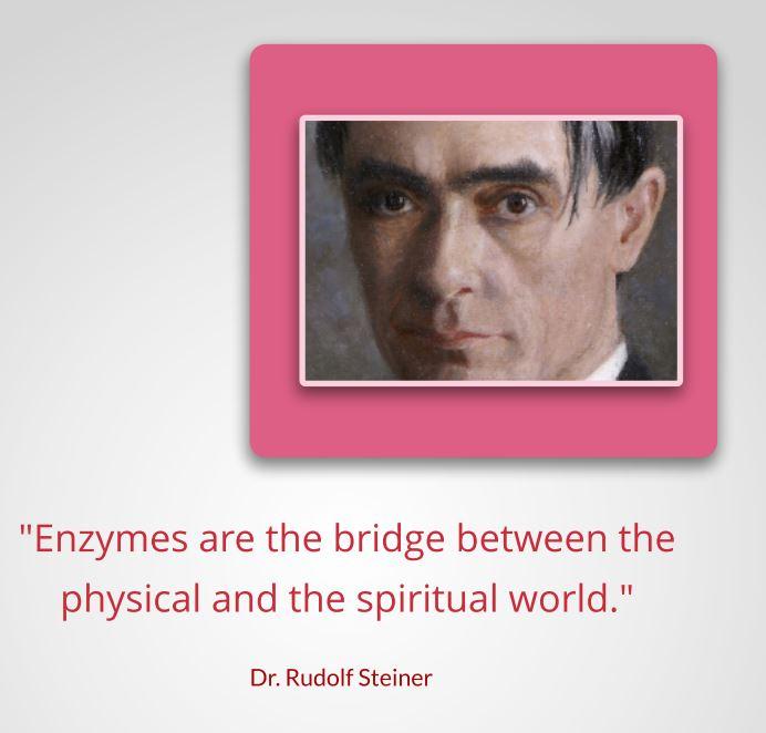 steiner and enzymes.JPG