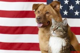 dog cat patriot