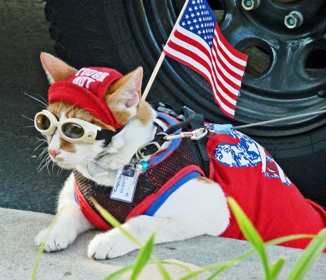 patriot cat