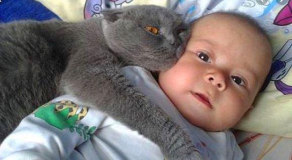 cat and baby 2.JPG