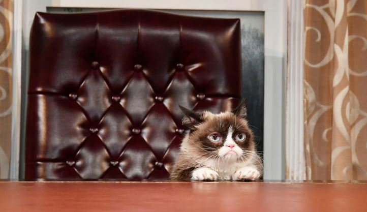 cat in chair.JPG
