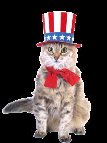 patriot_cat-removebg-preview (1).png