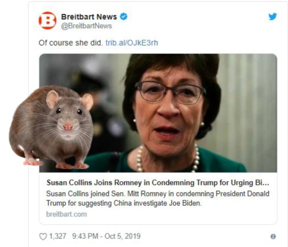 susan collins rat.jpg