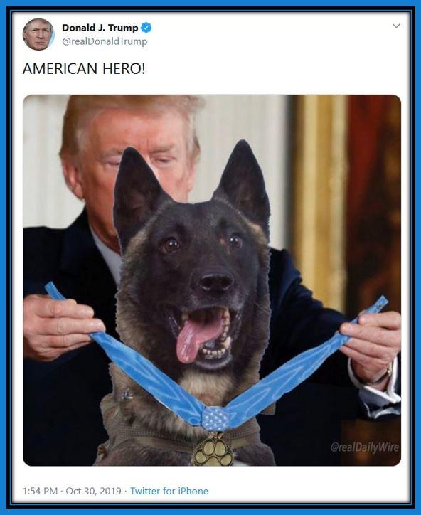 tt american hero dog.JPG