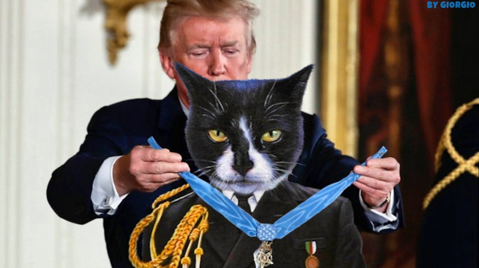 cat trump award giogio