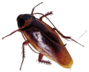 cockroach_2-removebg-preview.png