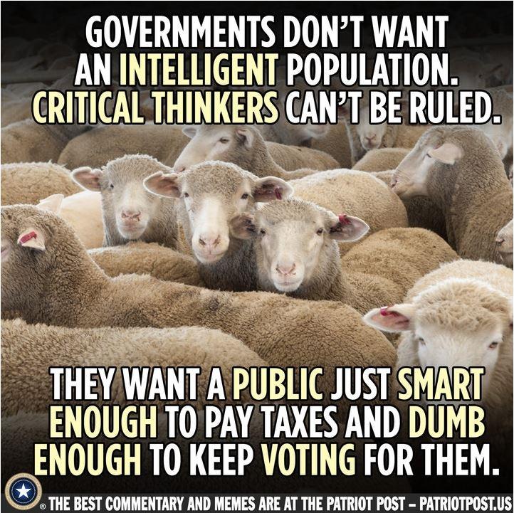 sheep voters.JPG