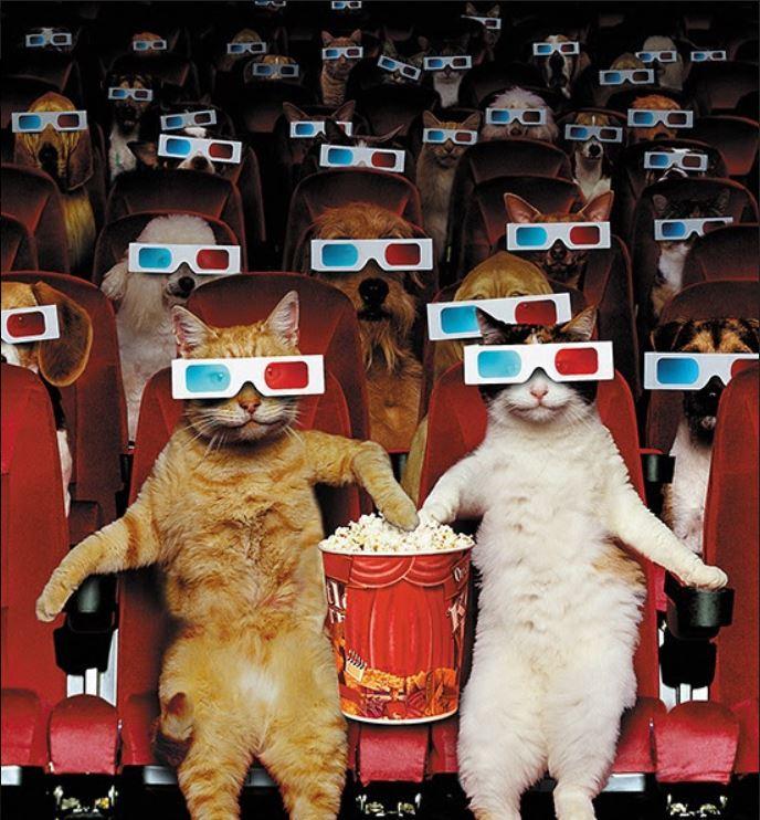 cats popcorn