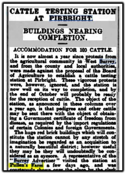 pirbright cattle