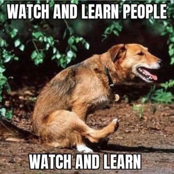dog wipes behind