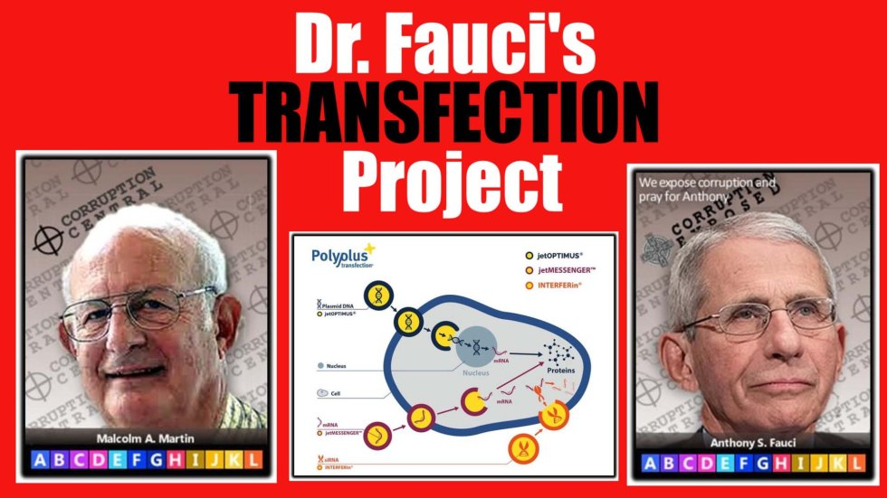 transfection project thumbnail